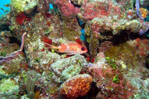 0289 64176 The Bahamas Underwater: Top Dive Sites Slideshow at Frommers