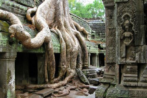 A tree overgrowing the ruins of Angkor Wat in Siem Reap, Cambodia.