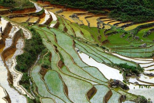 Rice paddies in Sapa, Vietnam.