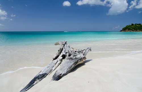 A piece of driftwood on Ffryes Beach, Antigua.