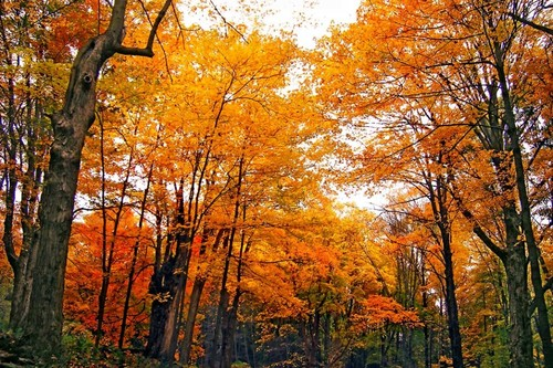 Deciduous forest in Warren County, within the Delaware Water Gap National Recreation Area.