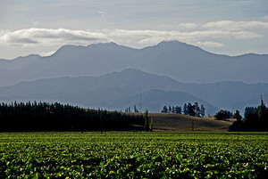 A photo of vineyards in Marlborough