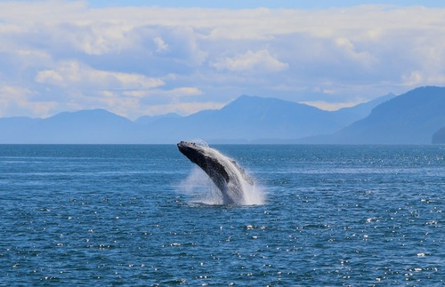What to do in Alaska in summer: Watch for whales in Prince William Sound