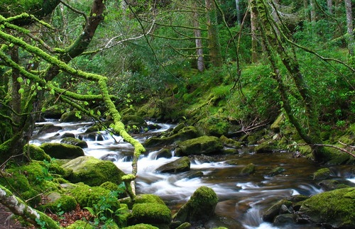 A stream in Killarney National Park in Ireland