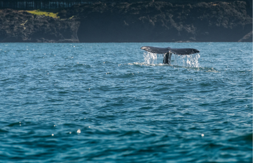 Best whale-watching in USA: Depoe Bay, Oregon