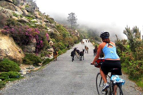 You may encounter some natural delays while on the Backroads bike tour from Barcelona to the Pyrénées and the Costa Brava. Courtesy Jane Royer