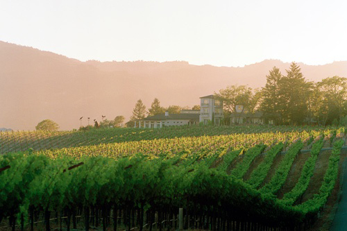 Sacrashe Vineyard at Hall Wines in Napa Valley. Photo courtesy Hall Wines