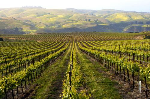 Santa Rosa Vineyard Tours
