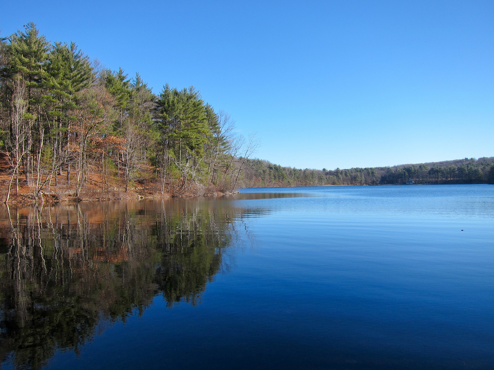 The reflection of a line of trees on Walden Pond.