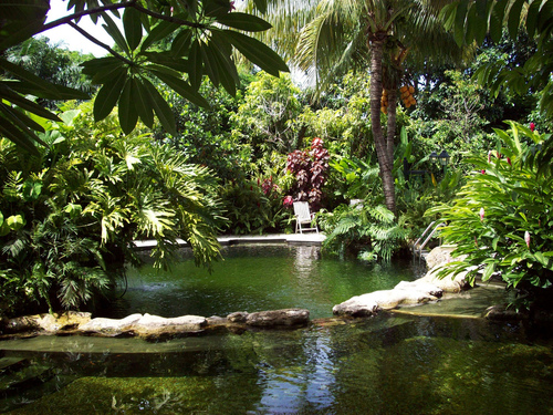 A green pond surrounded by lush tropical plants.