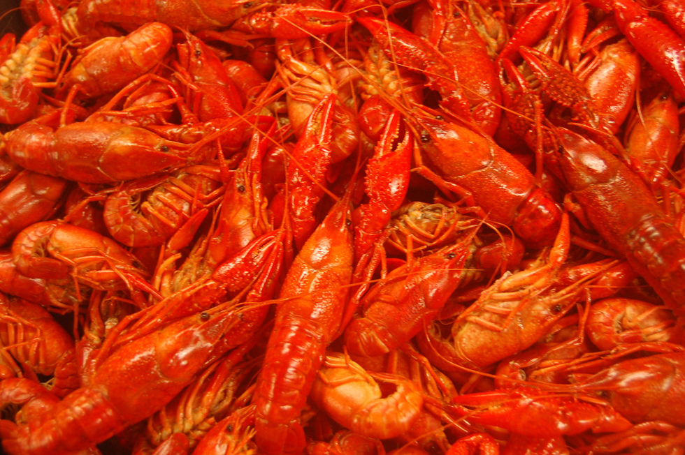 Crawfish are a major component in Louisiana cuisine.