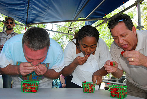 Berry-eating competition at Louisiana Strawberry Festival, Ponchatoula, Louisiana