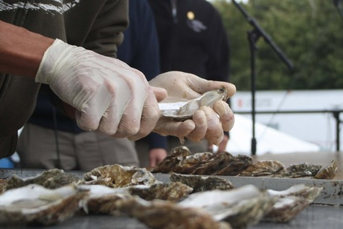 Wellfleet OysterFest, mid-October