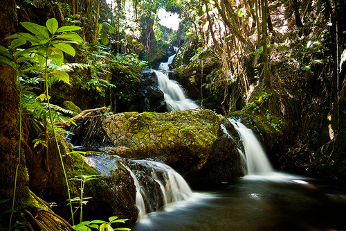Waterfalls in the forest in Maui.