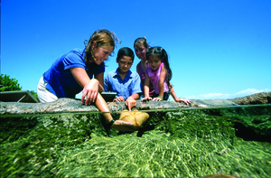 Children pet a starfish at the Maui Ocean Center