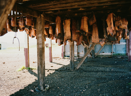 A shed with drying shark skin
