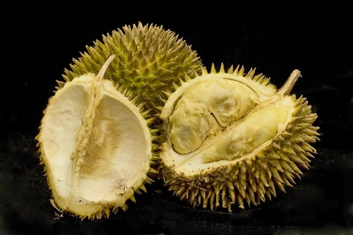 Durian fruits cracked open.