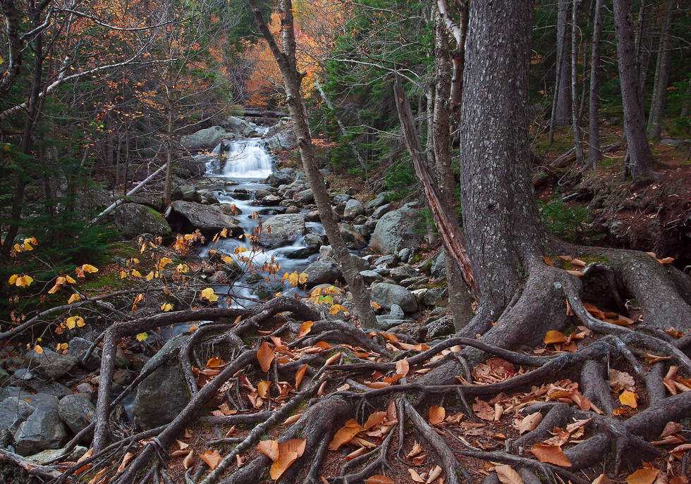 A hiking path in the White Mountains of New Hampshire