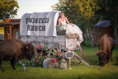 A bride poses atop a covered wagon with two buffalo at Twisted Ranch in Bertram Texas