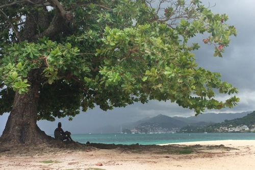 A woman watches an incoming storm from under a tree on Grand Anse Beach.