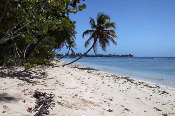 Pigeon Bay Beach in Tobago