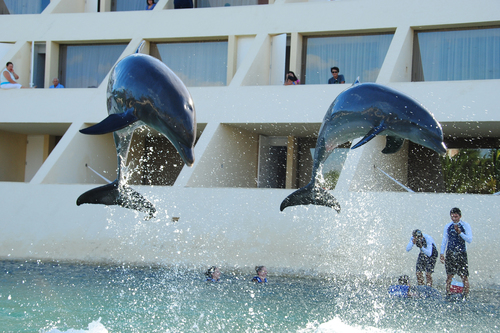 Dolphins in Cancun