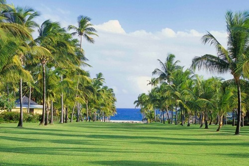The palm alley at the Nisbet Plantation in Nevis