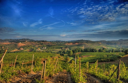 A vineyard in Chianti, Italy.