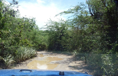 A dirt road in Vieques