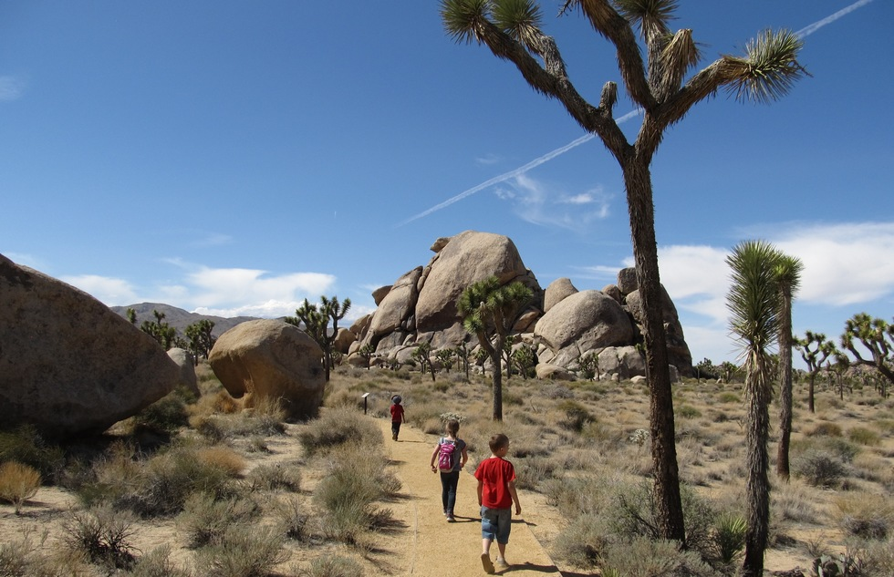 Hikers on a path in Joshua Tree National Park.