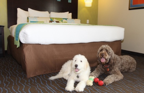 Pet Friendly Hotel Motel Chains
