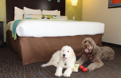 Best Dog Friendly Hotel Chains