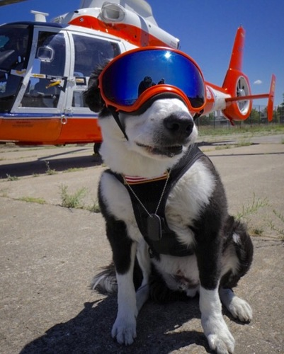 Piper is a dog trained to scare off birds from the runway of the Traverse City Airport, and thus prevent catastrophic engine collisions. She wears goggles and ear protectors, which allow her to work for 8 hours stretches.