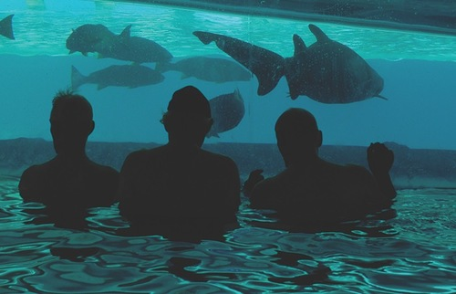 Swimmers at the Golden Nugget Hotel gaze into the shark aquarium that abuts the pool.
