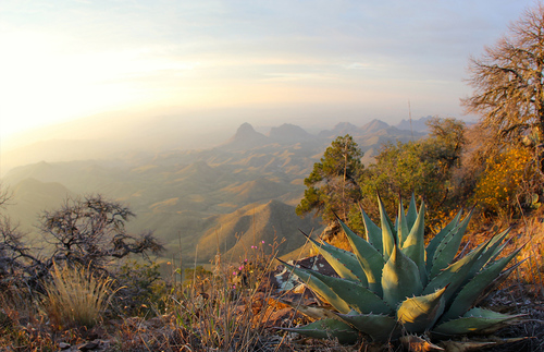 An agave plant at the South Rim overlook of the Chihuahuan Desert