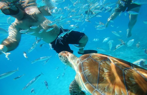 Swimming with turtles, Barbados