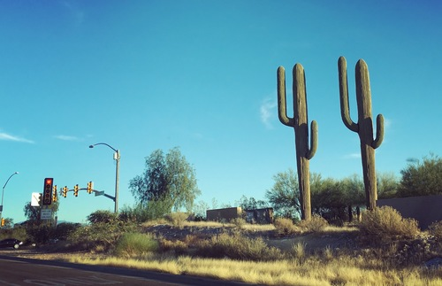 Land of the Saguaro