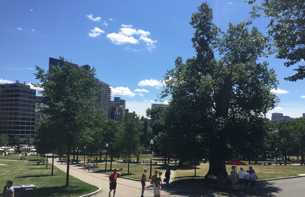 People enjoying the Boston Common park on a sunny day.