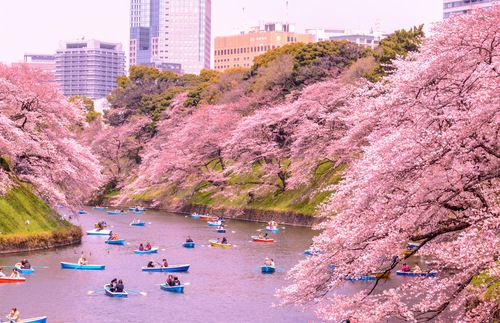 When to See Cherry Blossoms in Japan | Frommer's