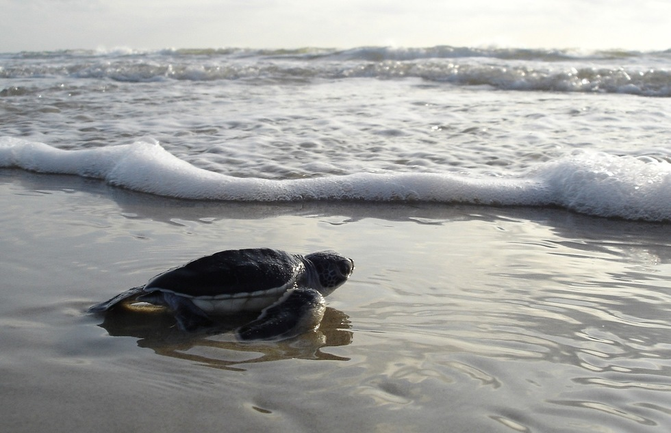 How to View Sea Turtles in Florida—Without Disturbing Them | Frommer's