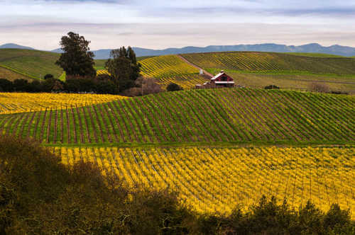 California Wine Country for Foodies | Frommer's