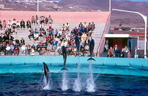 1962 photograph of the dolphin show at Marineland of the Pacific in Palos Verdes, California