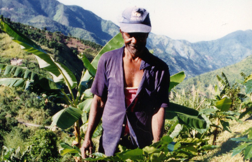 A worker stands with the coffee beans of the estate.