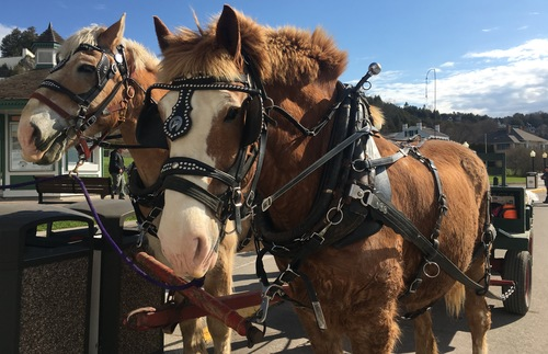 Horses on the main street of Mackinac Island