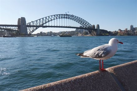 Doing the Famed Sydney Bridge Climb The Speedy Way | Frommer's