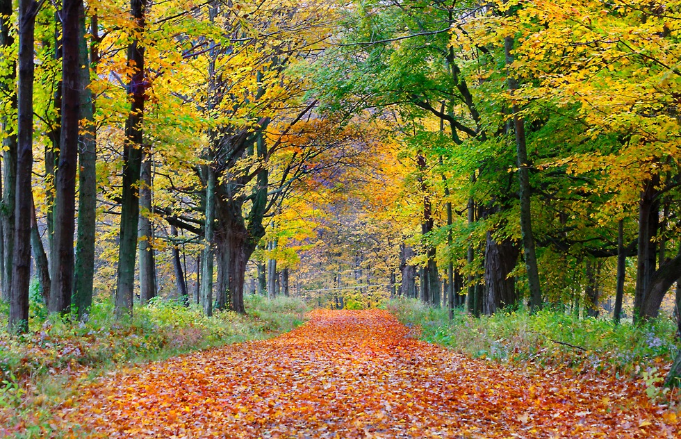 A lane bedecked in autumn leaves in the Berkshires