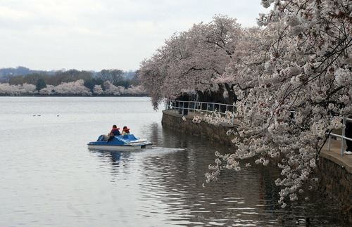 Paddle boat on the tidal basin