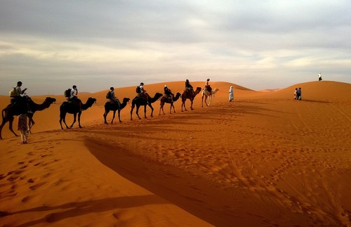 A camel safari in the desert
