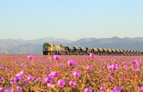 Wildflowers in Bloom at Chile's Atacama Desert—the Driest Place on Earth | Frommer's