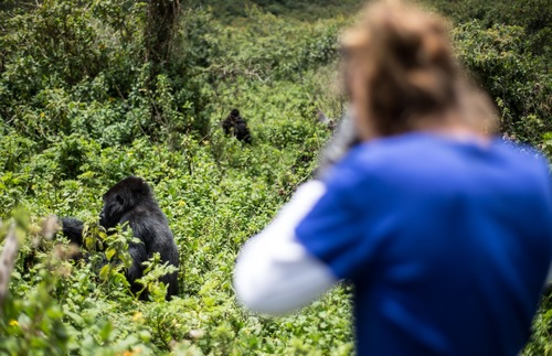 Gorilla Trekking in Uganda: How to Take This Bucket List Trip on a Budget | Frommer's